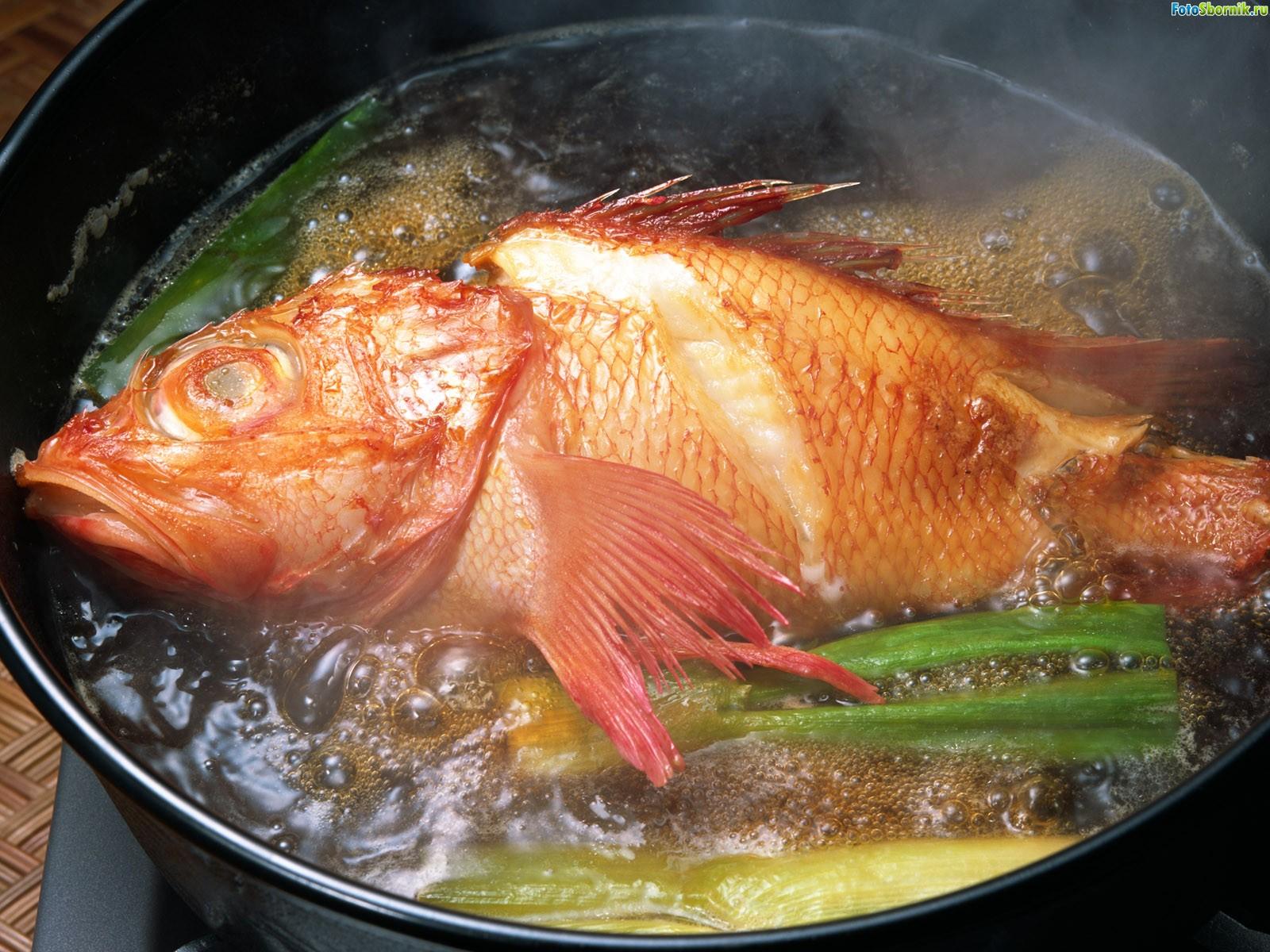 Рецепт ухи из морского окуня