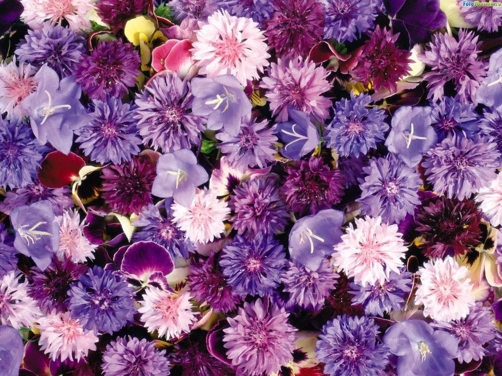 Картинки на раб стол цветы 1