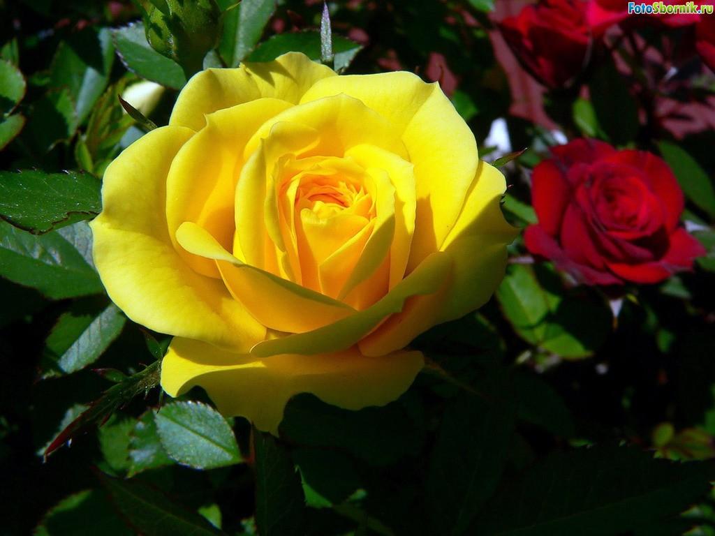 Смотреть картинки онлайн бесплатно цветы 2